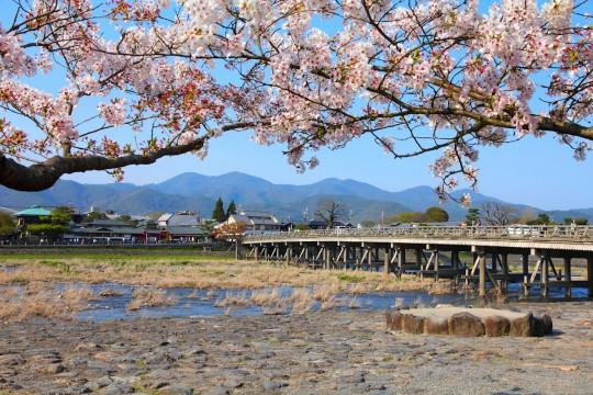 Japonia kwitnące wiśnie